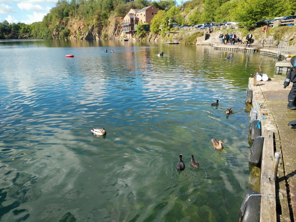 Ducks at Stoney Cove
